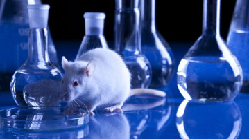 How Much Harm Does Animal Testing Do?