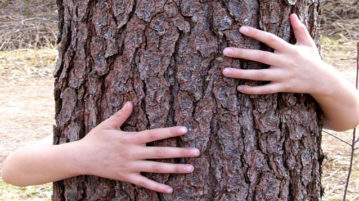 Holistics: Tree Hugging Or Better Than Beauty