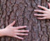 Holistics: Tree Hugging Or Better Than Beauty